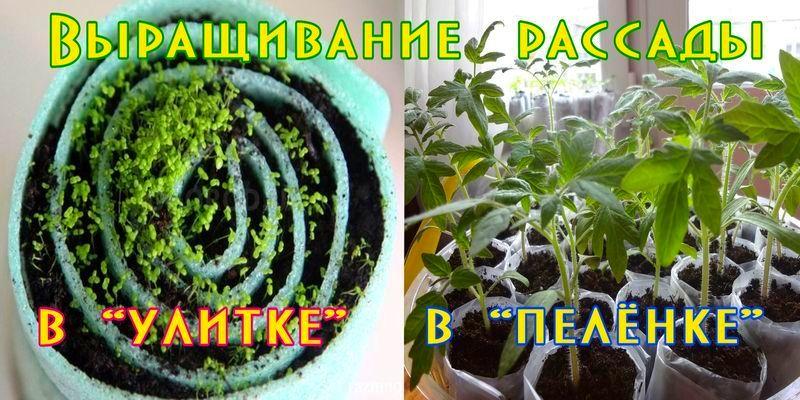 Выращивание качественной рассады в пеленках и улитках