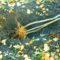 Как сохранить саженцы до весны, купленные осенью