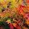 Уход за многолетниками осенью, подготовка к зиме